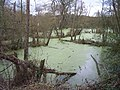 Nature Reserve by the River Severn - geograph.org.uk - 87060.jpg