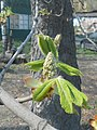 Nature in Smolensk - 02.jpg