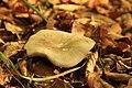 Nature reserve Ptaci stena in autumn 2011 (16).JPG