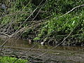 Naturschutzgebiet Heuckenlock 21.05.2014 Phase 85.JPG