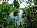 Naturschutzgebiet Reinheimer Teich 04.jpg