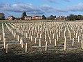 New Vineyard near Eccles - geograph.org.uk - 1060159.jpg