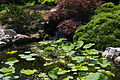 NorfolkBotanicalGardenJapanese.jpg