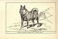 Norwegian Elkhound BDL.jpg