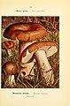Nouvel atlas de poche des champignons comestibles et vénéneux (Pl. 33) (6459638027).jpg