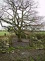 Oak, Sara Beck - geograph.org.uk - 301860.jpg