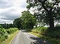 Oak lined road - geograph.org.uk - 28992.jpg