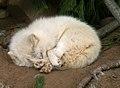 Oaklawn Farm Zoo, May 16 2009 (3539717944).jpg
