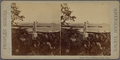 Ocean view, Phillip's Point, Mass, from Robert N. Dennis collection of stereoscopic views.png