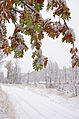 October came with snow (3979606919).jpg