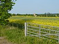 Oilseed rape field - geograph.org.uk - 839157.jpg