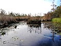 Okefenokee Swamp Trail to Monkey Lake - panoramio.jpg