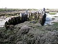 Old groyne west of South Fambridge - geograph.org.uk - 160898.jpg