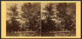 On Lycoming Creek, Pa, by Moran, John, 1831-1903.png