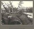 Overturned trees, forest debris and peaty soil left in the wake of glacier ice, Columbia Glacier, Alaska, June 1899 (HARRIMAN 115).jpg