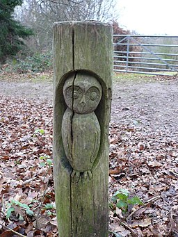 Owl carving on a post in Shoreham Woods - geograph.org.uk - 641918