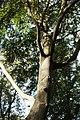PM 112975 B Koppenberg.jpg