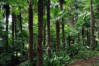 Brissago Islands - Image: Palmenwaldbrissagoin sel