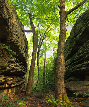 Moshannon State Forest - The Panther Rocks formation in Moshannon State Forest
