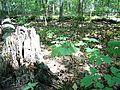 Parc-nature du Bois-de-l-ile-Bizard 24.jpg