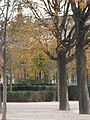 Paris 75001 Jardins du Carrousel trees in autumn.jpg