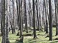 Park Koplis - panoramio - Aulo Aasmaa.jpg