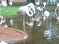 Parque das aves foz de iguaçu.jpg