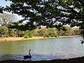 Parque do Ibirapuera em um dia ensolarado.jpg