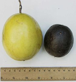 Passionfruit comparison.jpg