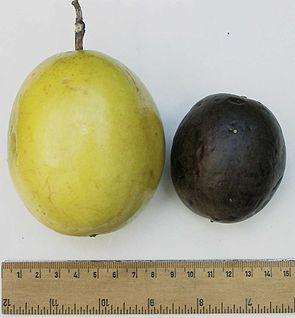 Früchte von Passiflora edulis,  links forma flavicarpa, rechts forma edulis