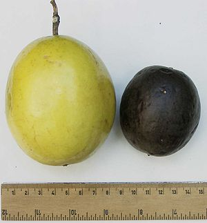 Purple and yellow passion fruits, side by side...