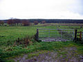 Pastureland and forestry - geograph.org.uk - 279679.jpg