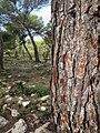Path to Cala Macarelleta (29503607843).jpg