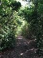 Pathway - panoramio (6).jpg