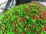 Pepper production (8330379130).jpg