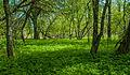 Perham Forest (15836430626).jpg