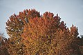PermaLiv autumn trees 20-09-20 1.jpg