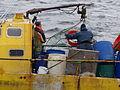 Pesca de centolla en la Bahía Ushuaia 12.JPG