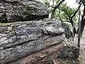 Petrified Redwood - Sequoia langsdorfii, Metasequoia - 16.jpg