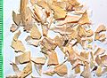 Phaseoli pericarpium by Danny S. - 001.jpg