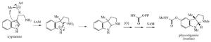 Physostigmine - Physostigmine proposed biosynthesis