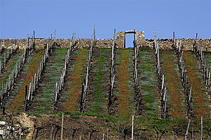 Boudry - Vineyards outside Boudry