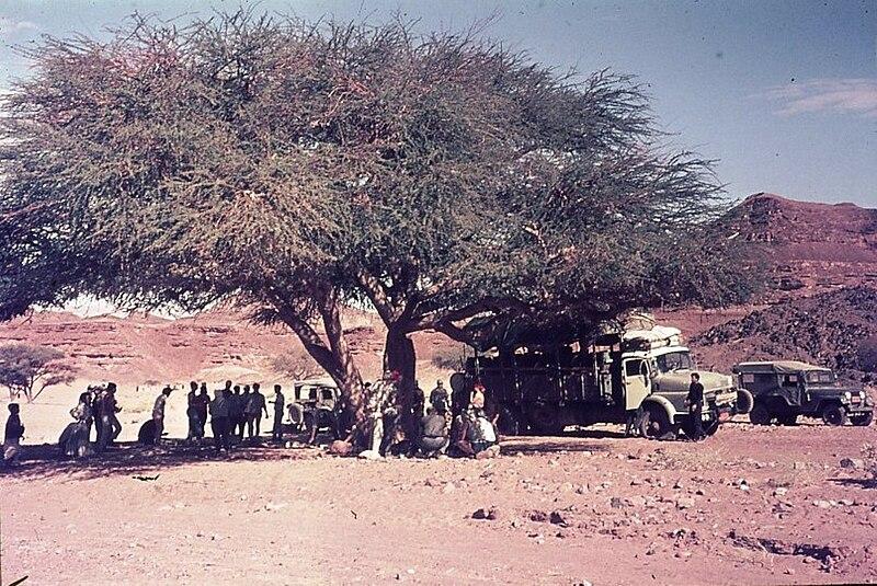גן-שמואל-בטיול למדבר סיני 1968
