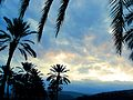PikiWiki Israel 28840 palm Trees in Tsemah Tiberias.jpg