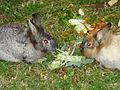 PikiWiki Israel 43237 rabbits.jpg