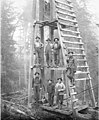 Pile driver and crew, Ebey Logging Company, ca 1917 (KINSEY 159).jpeg