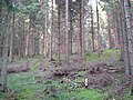 Pine Forest work in Chase Woods - geograph.org.uk - 273679.jpg