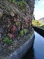 Plantas, rochas e água da levada.jpg