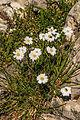Plants from Sassolongo 20.jpg