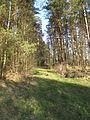 Podlaskie - Szudziałowo - Grodzisko - WKLPK Pozostałość torowiska 20120428 01.JPG
